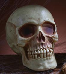 "Skull Acrylic Prop 8"" w/ Jaw Bone"