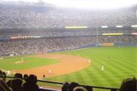 Yankee Stadium (CafePress-Yankee 4)