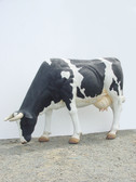 Holstein Cow Grazing Life Size Statue