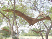 Huge Pterodactyl Flying Life Size Statue Hanging