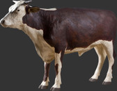 Hereford Steer Life Size Statue