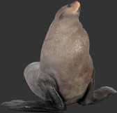 Fur Seal Statue - Male