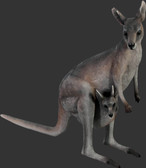 Kangaroo with Joey Statue
