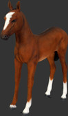 Baby Horse Foal Statue Life Size