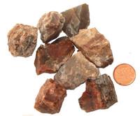 Raw Petrified Wood Stone - Large