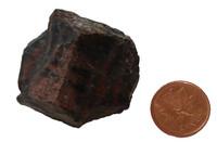 Petrified Wood Rough - Specimen D