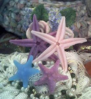Silicone Star Fish Starfish Soap Candle Tart Mold #3