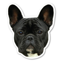 (Black) French Bulldog  Magnet