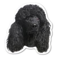 (Black) Poodle Magnet
