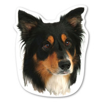 (Black and White) Collie  Magnet