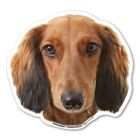 (Longhaired) Dachshund Magnet