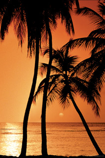 Tropical Sunset Photo Art Print Poster 24x36