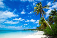 Beach With Palm Trees Photo Art Print Poster 36x24