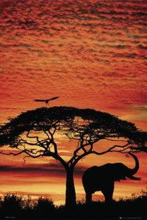 Africa Sunset Photo Art Print Poster 24x36