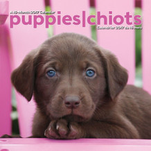 Puppies Bilingual 2017 16 Month Wall Calendar 12x12