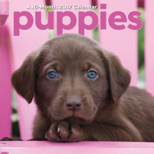 Puppies 2017 16 Month Wall Calendar 12x12