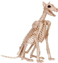 Skeleton Doberman