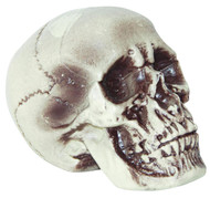 Realistic Skull 7 Inches