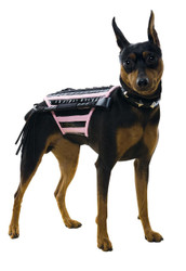 Doginatrix Pk-bk Dog Costum Md
