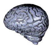 Brain-human Grey