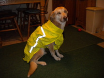 Chillybuddy Dog Raincoat