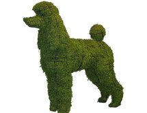 Standard Poodle Mossed Topiary Dog