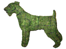 Airedale Topiary Dog Mossed Frame