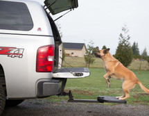 Provides easy access for larger dogs to reach the truck bed