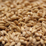 Pilsner Base Malt - Organically Grown