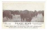 Grand Island, Nebraska Postcard:  Shady Bend Tourist Haven & Buffalo Herd