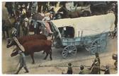 Kansas City, Missouri Postcard:  Ezra Meeker's Ox Team Heading Industrial Parade, October 5, 1910