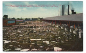 Waco, Texas Vintage Postcard:  Cotton Compress