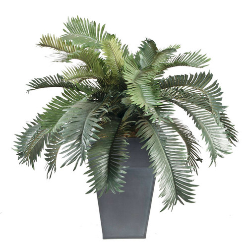 Cycas plant- double, priced in liner, decorative container choices available