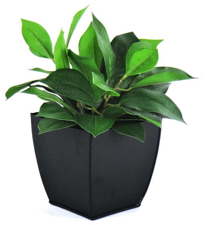Bay Leaf planter
