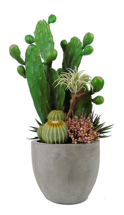 Prickly Pear cactus garden