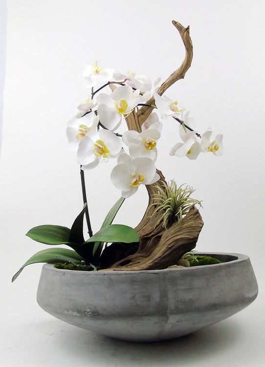 Phalaenopsis orchids with ghostwood branch.