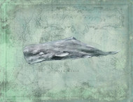 Sperm Whale by Anthony Morrow