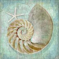 Aqua Distressed Nautilus Art