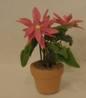 2150 - Plant:  Poinsettia - Pink