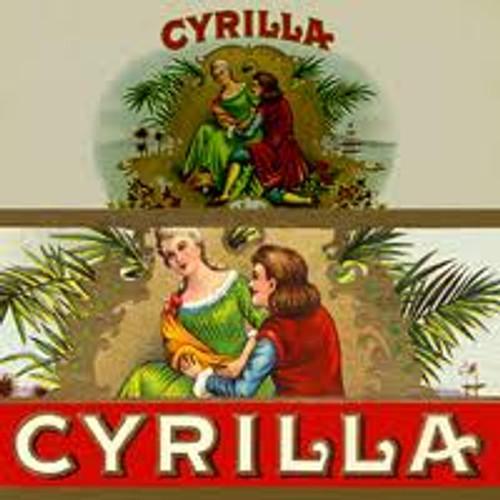 Cyrilla Nationals Maduro Cigars - 6 x 42
