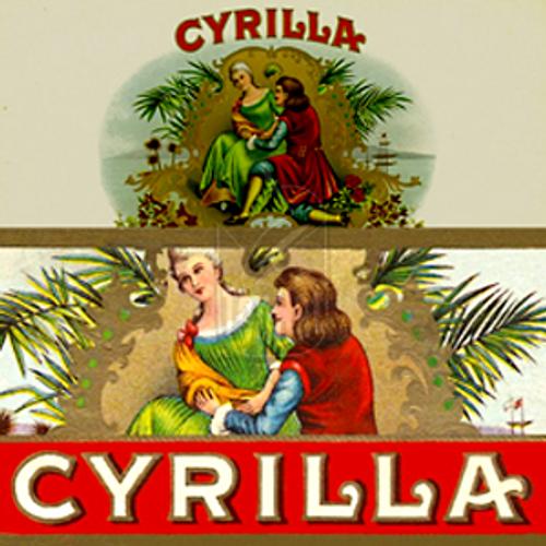 Cyrilla Slims Maduro Cigars - 6 1/2 x 36