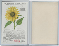 F213-3 Coca Cola, Nature Study, Wild Flowers, 1920's,  #10 Sunflower