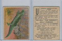 FC1, Harry Horne Co, Nu-Jell, Animals And Birds, 1925, Arabian TT Lizard