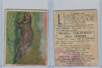 FC1, Harry Horne Co, Nu-Jell, Animals And Birds, 1925, Civet Cat