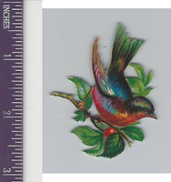 Victorian Diecuts, 1890's, Birds, Bird in Branches (42)
