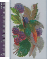 Victorian Diecuts, 1890's, Birds, Bird & Berries (67)