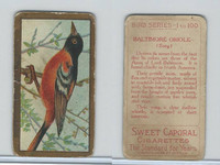 T42 American Tobacco, Birds, 1910, Baltimore Oriole (Gold)