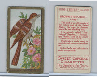 T42 American Tobacco, Birds, 1910, Brown Thrasher