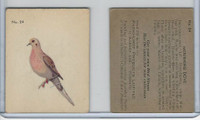 V339-2 Parkhurst, Audubon Society Birds, 1952, #24 Mourning Dove