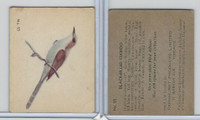 V339-2 Parkhurst, Audubon Society Birds, 1952, #25 Black-Billed Cuckoo